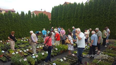 široký výber skalničiek a rastlín v Záhradníctve EMMA s.r.o.